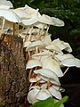 Mushroom Pakke unid 4.jpg