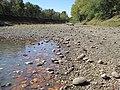 Mussel stranding, Marais de Cygnes Refuge (8427237114).jpg