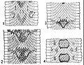 NIE 1905 Rattlesnake - patterns of color markings.jpg