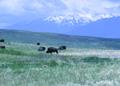 NRCSMT90001 - Montana (5049)(NRCS Photo Gallery).tif