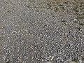 NSG Büchelberg - Fragwürdige Wegeverbesserung mit Granit auf Kalkstein.jpg
