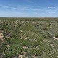 NTIR staff walk ruts and swales on private land near the Cimarron National Grassland - 2 (f29eb2b00c284d1fac2bd74dc778a32d).JPG