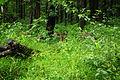 Nagarhole National Park, Kodagu 6895.JPG