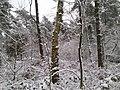 Naherholungsgebiet am Rande des Ruhrgebiets - Winter 2009 - panoramio (7).jpg