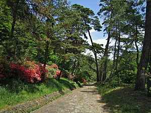 Nakasendo Kasatori Pass avenue of pines.jpg