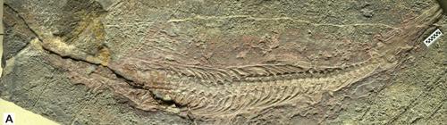 Nanchangosaurus