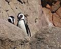 National Aviary (13020420164).jpg