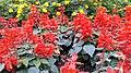 National Botanical Garden of Georgia (HDR Photo, Lg G16) باغ بوتانیکال، شهر تفلیس.jpg