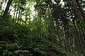 Natural monument Jílovské tisy in summer 2014 (4).JPG