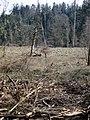 Nature reserve area near Bremgarten b. Bern - panoramio.jpg