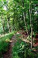 Naturschutzgebiet Saupark - Kleiner Deister - Waldweg (4).jpg
