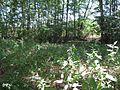 Naturschutzgebiet Storkower Kanal 09.jpg