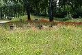 Natuur P1390028copy.jpg