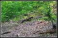 Nembra, 25048 Edolo BS, Italy - panoramio - Gregorini Demetrio (3).jpg