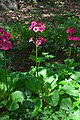 Neuer Botanischer Garten Marburg - 0019.jpg