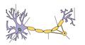 Neuron CNS - no labels.png