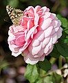 New York Botanical Garden (8076048243).jpg