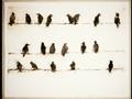 Nineteen Birds.png