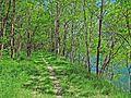 Oasi Naturale del Bosco Tenso di Premosello Chiovenda (Vb) 2.jpg