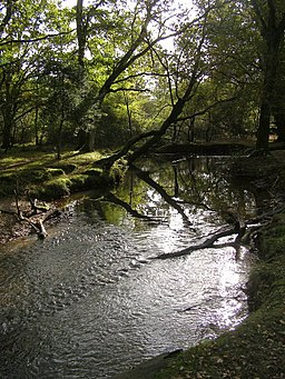 Ober Water on the edge of the Aldridgehill Inclosure, New Forest - geograph.org.uk - 282073