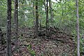 Ohiopyle State Park River Trail - panoramio (130).jpg