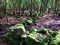 Old walls in Broomage Wood - geograph.org.uk - 315273.jpg