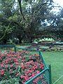 Ooty botanical garden.jpg