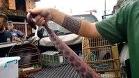 File:Operação resgata animais silvestres em Praia Grande e prende quatro pessoas.webm