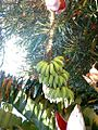 Orange county banana tree flowers and fruit.jpg