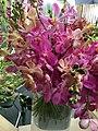Orchid-10.jpg