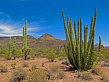 Organ Pipe Cactus National Monument 3.jpg