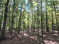 Pădure în Rezervația Științifică Codrii.jpg