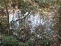 P39 Lawachara National Park, In Moulovibajar, Bangladesh.jpg