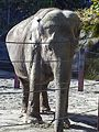 PDZA Elephant 2015.jpg