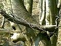 POL-Rezerwat przyrody Buczyna nad Słupią 046.jpg