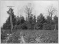 PSM V78 D481 Chestnut trees destroyed by bark disease.png