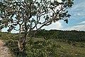 Paisagem no topo da serra da Canastra.JPG