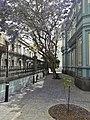 Palacete Rodriguez Quegles.Jacaranda.jpg