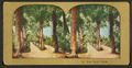 Palm Beach, Florida, from Robert N. Dennis collection of stereoscopic views.png
