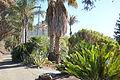 Palm walkway - Leaning Pine Arboretum - DSC05520.JPG