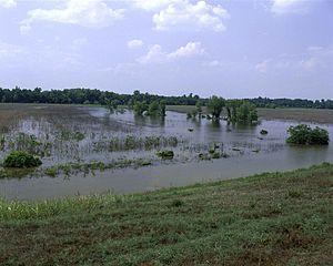 Panther Swamp National Wildlife Refuge - Panther Swamp National Wildlife Refuge