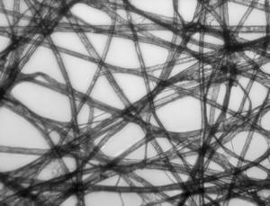 Bright-field microscopy - Image: Paper Micrograph Bright