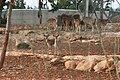 Paphos Zoo, Cyprus - panoramio (40).jpg
