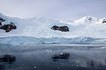 Paradise Bay Glacier Antarctica (40371655653).jpg