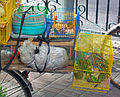 Parakeets and rodents for sale from bike on Fuzhou Road in Shanghai.jpg