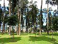 Parque Bosque San Carlos.JPG