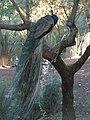 Parque de Los Pinos (Plasencia) 20.jpg