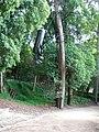 Parque de Santa Cruz ou Jardim da Sereia 2.jpg