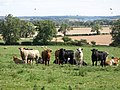 Pastures near Clarewood - geograph.org.uk - 617382.jpg