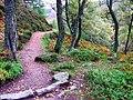 Path to Clachnaben - geograph.org.uk - 724998.jpg